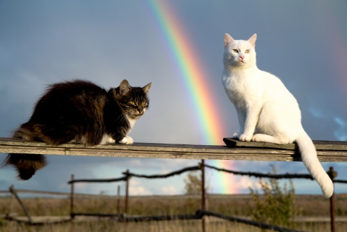 two cats sit on fence and rainbow